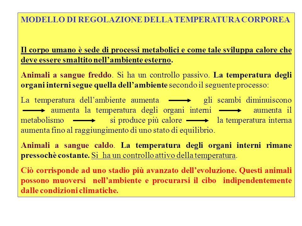 MODELLO DI REGOLAZIONE DELLA TEMPERATURA CORPOREA Il corpo umano è sede di processi metabolici e come tale sviluppa calore che deve essere smaltito ne