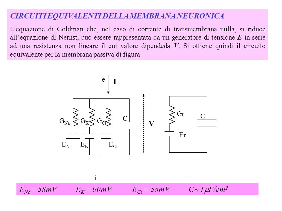 CIRCUITI EQUIVALENTI DELLA MEMBRANA NEURONICA Lequazione di Goldman che, nel caso di corrente di transmembrana nulla, si riduce allequazione di Nernst