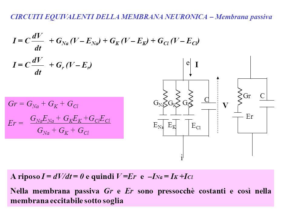 CIRCUITI EQUIVALENTI DELLA MEMBRANA NEURONICA – Membrana passiva G Na E Na e I i GKGK EKEK E Cl G Cl C V C Gr Er I = C dV dt + G Na (V – E Na ) + G K