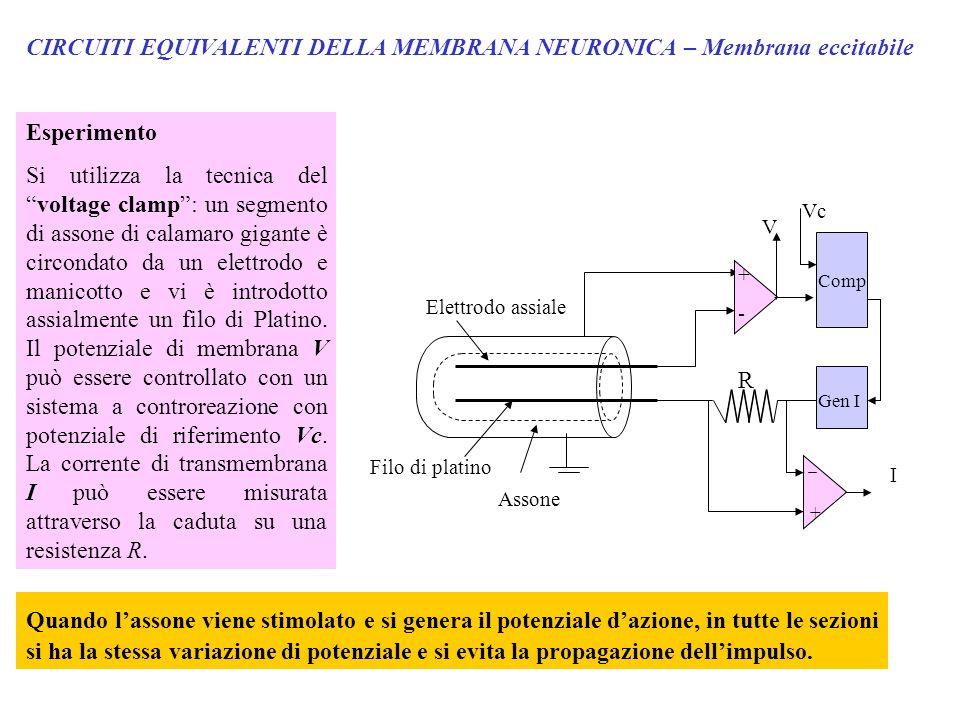CIRCUITI EQUIVALENTI DELLA MEMBRANA NEURONICA – Membrana eccitabile Esperimento Si utilizza la tecnica delvoltage clamp: un segmento di assone di cala