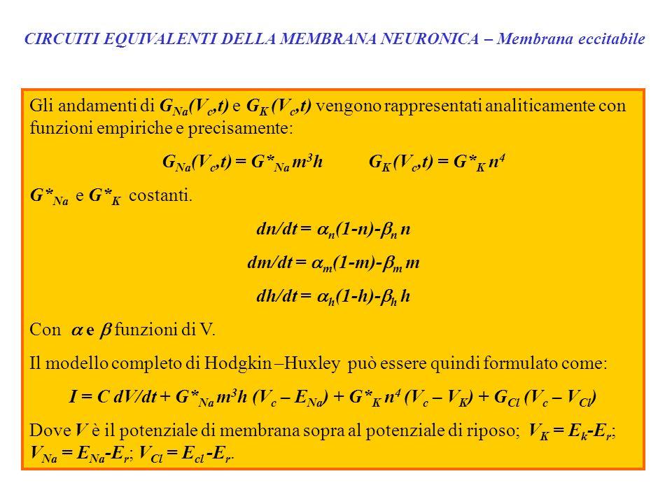 CIRCUITI EQUIVALENTI DELLA MEMBRANA NEURONICA – Membrana eccitabile Gli andamenti di G Na (V c,t) e G K (V c,t) vengono rappresentati analiticamente c