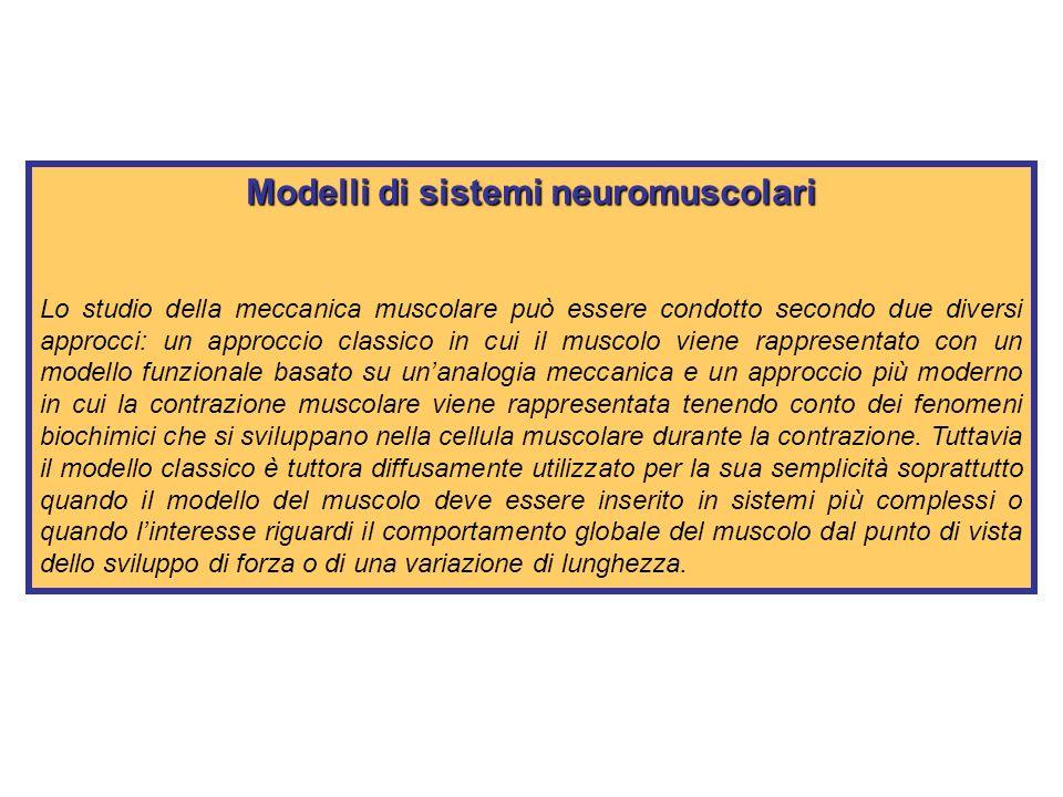 Modelli di sistemi neuromuscolari Il muscolo scheletrico.