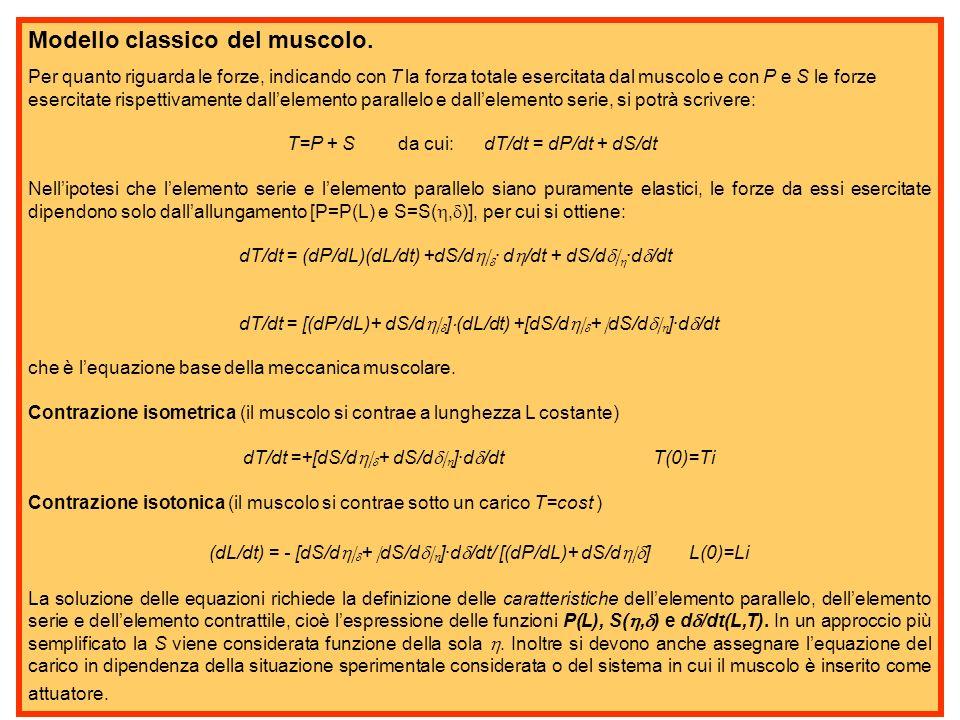 Modello classico del muscolo.