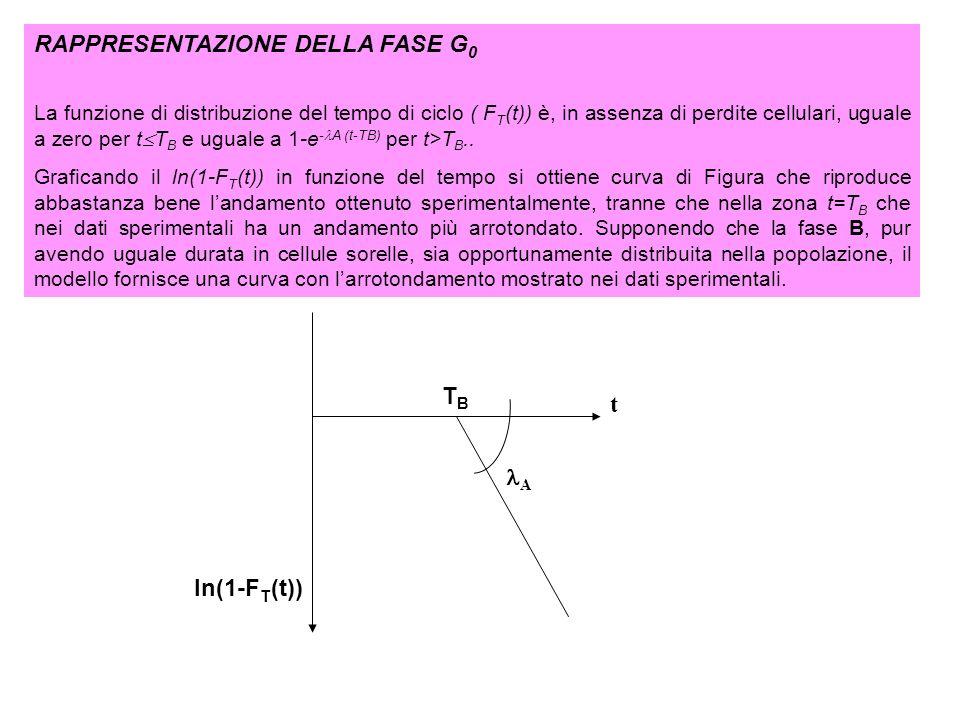 RAPPRESENTAZIONE DELLA FASE G 0 La funzione di distribuzione del tempo di ciclo ( F T (t)) è, in assenza di perdite cellulari, uguale a zero per t T B
