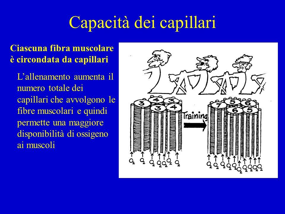 Capacità dei capillari Ciascuna fibra muscolare è circondata da capillari Lallenamento aumenta il numero totale dei capillari che avvolgono le fibre m