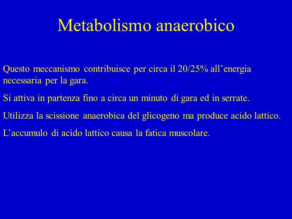 Metabolismo anaerobico Questo meccanismo contribuisce per circa il 20/25% allenergia necessaria per la gara. Si attiva in partenza fino a circa un min