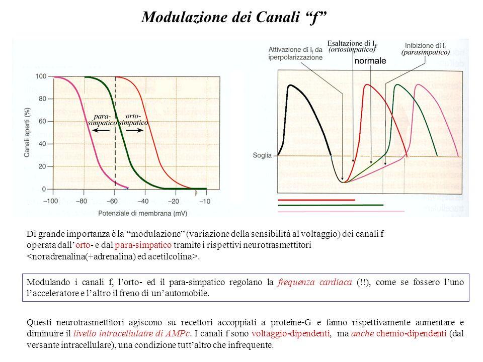 Interazione tra canali T e canali f Lesempio del pda (al Ca 2+ ) del pacemaker cardiaco ci offre lopportunità di parlare di un altro tipo di canali vo