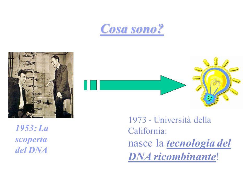 Cosa sono? 1953: La scoperta del DNA 1973 - Università della California: nasce la tecnologia del DNA ricombinante!