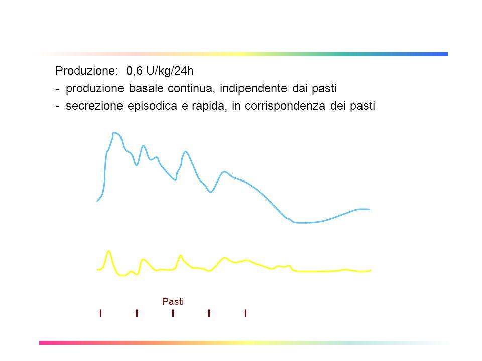 Profilo fisiologico dellinsulina Produzione: 0,6 U/kg/24h - produzione basale continua, indipendente dai pasti - secrezione episodica e rapida, in cor