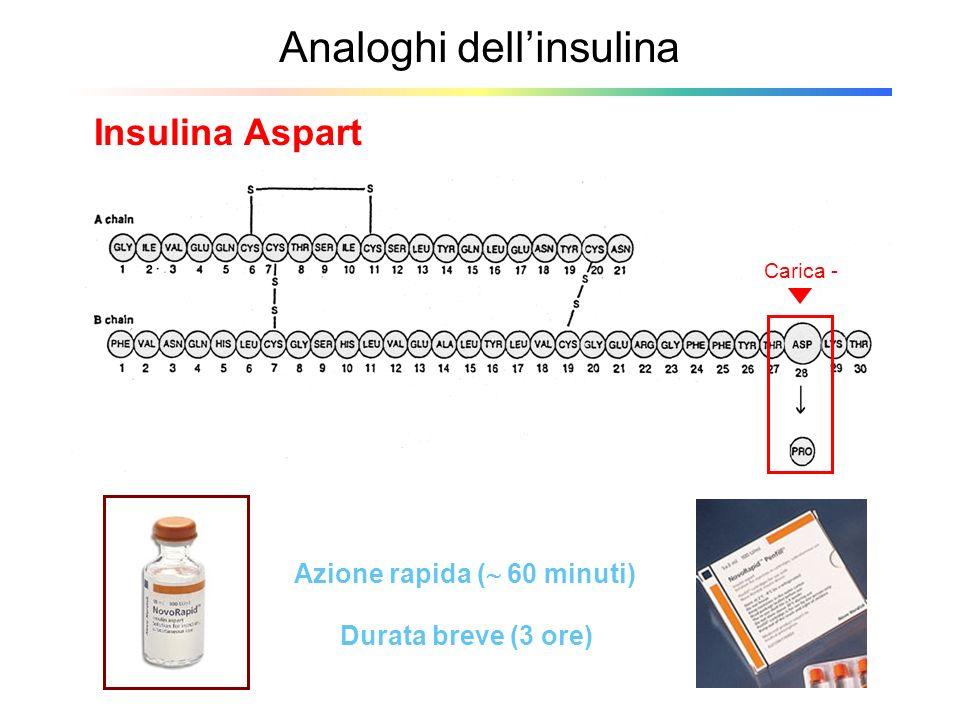 Analoghi dellinsulina Insulina Aspart Azione rapida ( 60 minuti) Durata breve (3 ore) Carica -