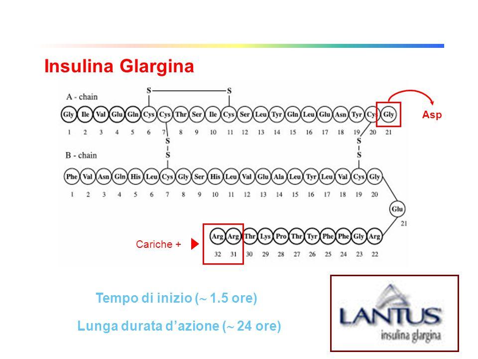 Asp Analoghi dellinsulina Insulina Glargina Cariche + Lunga durata dazione ( 24 ore) Tempo di inizio ( 1.5 ore)