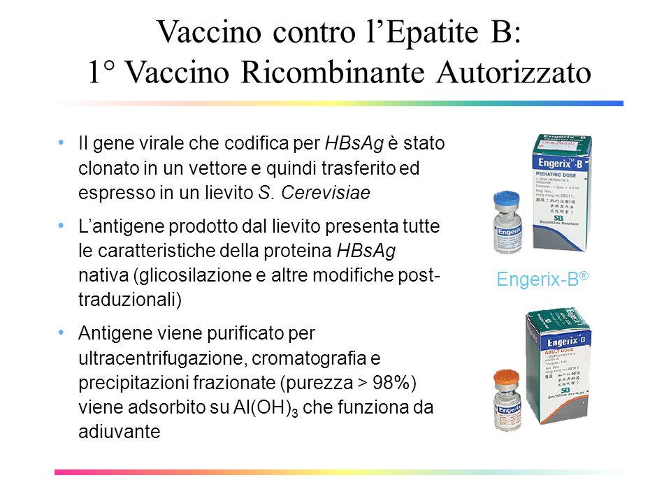 Vaccino contro lEpatite B: 1° Vaccino Ricombinante Autorizzato Il gene virale che codifica per HBsAg è stato clonato in un vettore e quindi trasferito