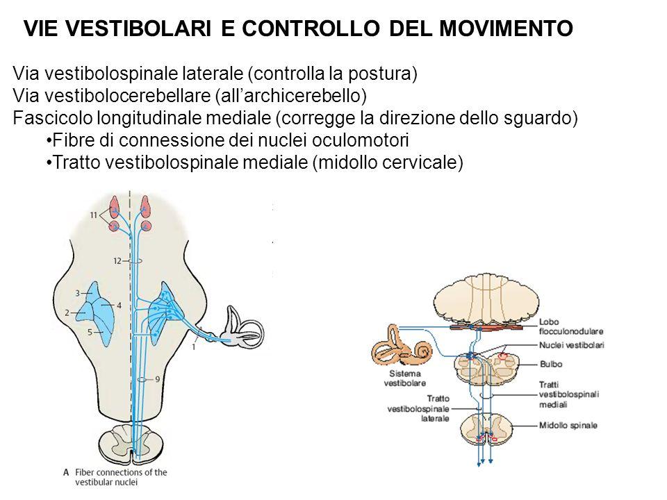 VIE VESTIBOLARI E CONTROLLO DEL MOVIMENTO Via vestibolospinale laterale (controlla la postura) Via vestibolocerebellare (allarchicerebello) Fascicolo longitudinale mediale (corregge la direzione dello sguardo) Fibre di connessione dei nuclei oculomotori Tratto vestibolospinale mediale (midollo cervicale)