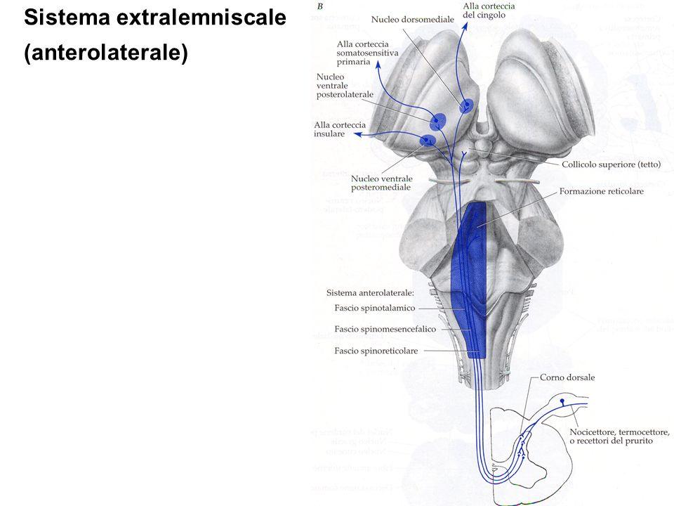 Sistema extralemniscale (anterolaterale)