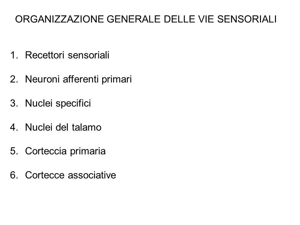 1.Recettori sensoriali 2.Neuroni afferenti primari 3.Nuclei specifici 4.Nuclei del talamo 5.Corteccia primaria 6.Cortecce associative ORGANIZZAZIONE GENERALE DELLE VIE SENSORIALI