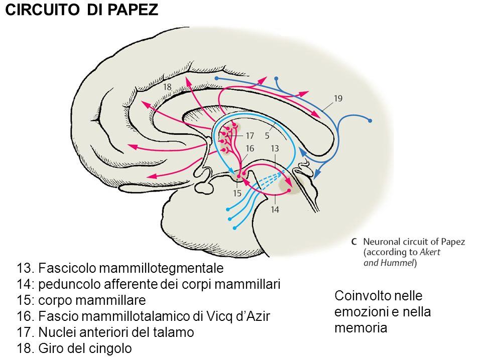 CIRCUITO DI PAPEZ 13.