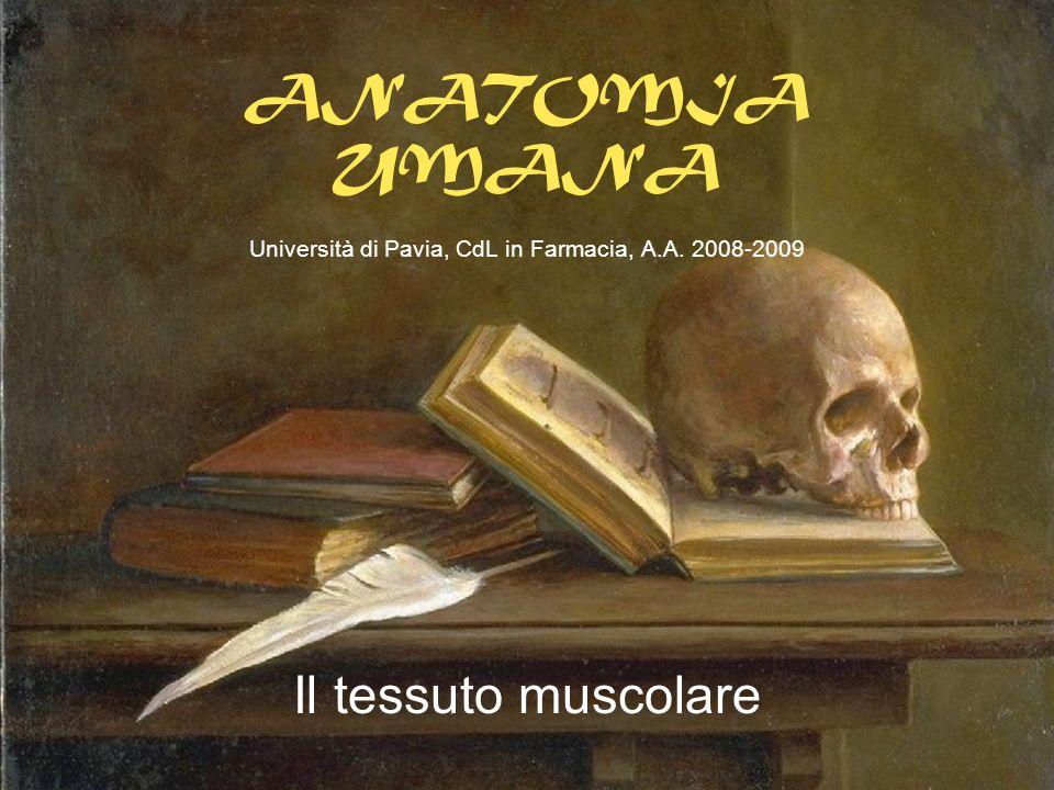 ANATOMIA UMANA Università di Pavia, CdL in Farmacia, A.A. 2008-2009 Il tessuto muscolare