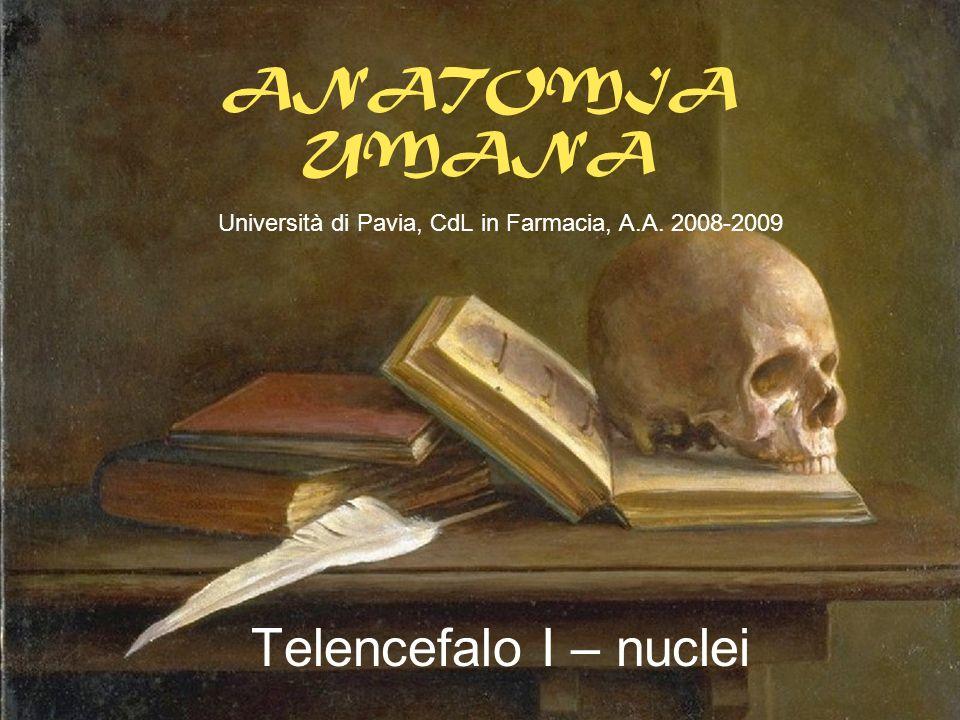 ANATOMIA UMANA Università di Pavia, CdL in Farmacia, A.A. 2008-2009 Telencefalo I – nuclei