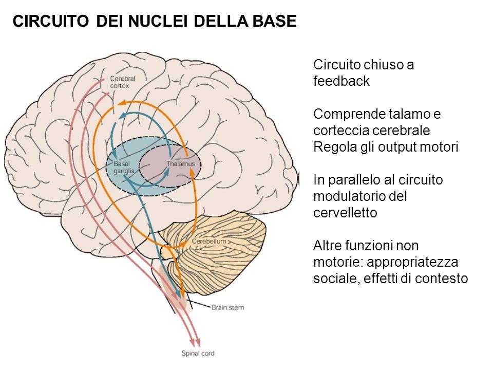 CIRCUITO DEI NUCLEI DELLA BASE Circuito chiuso a feedback Comprende talamo e corteccia cerebrale Regola gli output motori In parallelo al circuito mod