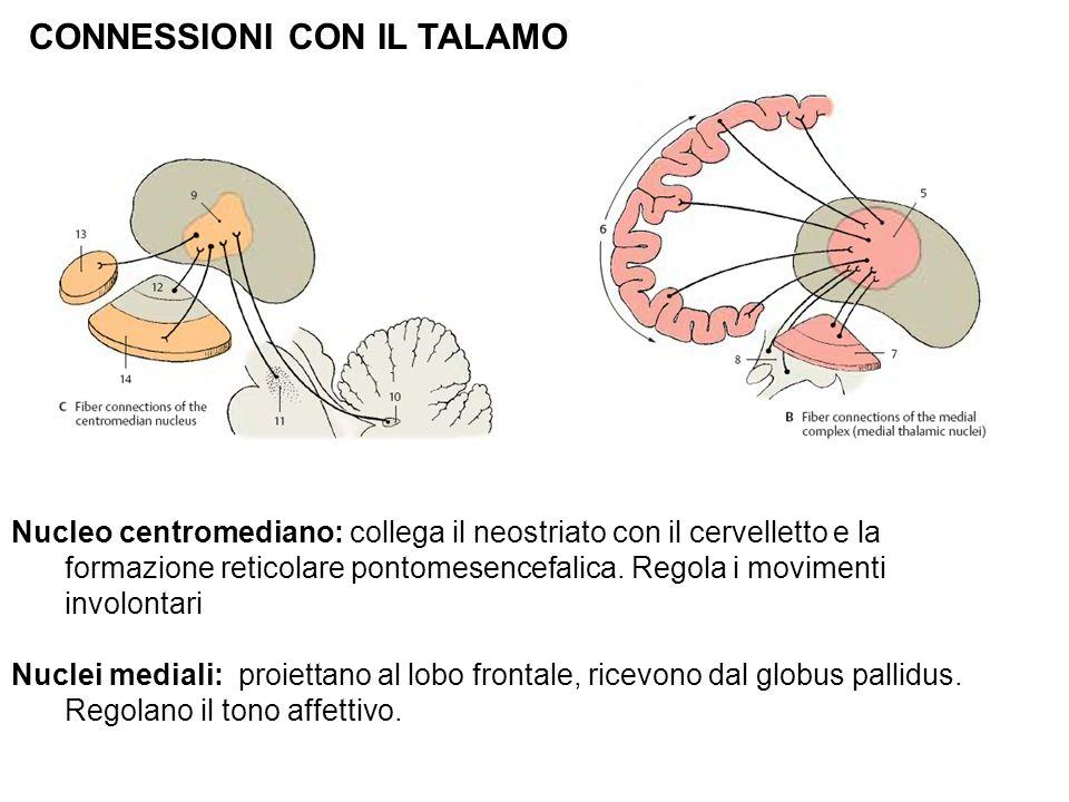CONNESSIONI CON IL TALAMO Nucleo centromediano: collega il neostriato con il cervelletto e la formazione reticolare pontomesencefalica. Regola i movim