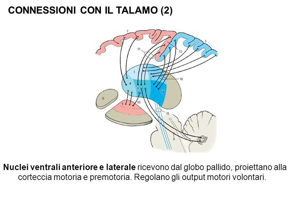 CONNESSIONI CON IL TALAMO (2) Nuclei ventrali anteriore e laterale ricevono dal globo pallido, proiettano alla corteccia motoria e premotoria. Regolan
