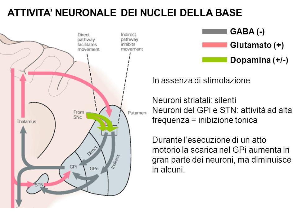 ATTIVITA NEURONALE DEI NUCLEI DELLA BASE GABA (-) Glutamato (+) Dopamina (+/-) In assenza di stimolazione Neuroni striatali: silenti Neuroni del GPi e