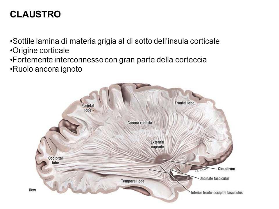 CLAUSTRO Sottile lamina di materia grigia al di sotto dellinsula corticale Origine corticale Fortemente interconnesso con gran parte della corteccia R