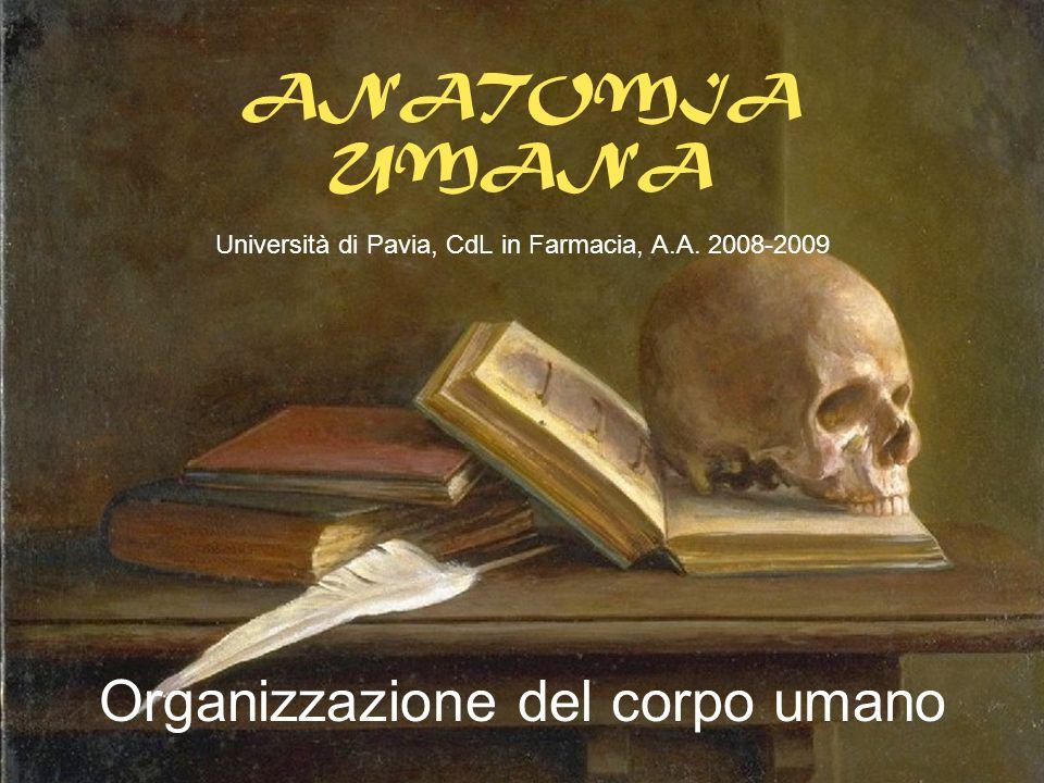 ANATOMIA UMANA Università di Pavia, CdL in Farmacia, A.A. 2008-2009 Organizzazione del corpo umano
