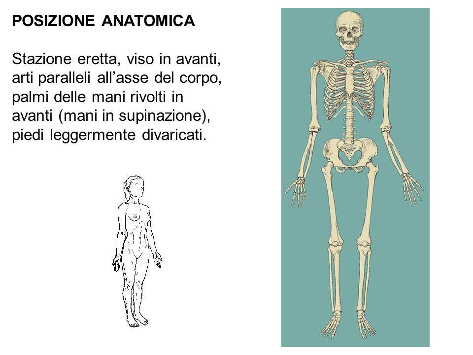 POSIZIONE ANATOMICA Stazione eretta, viso in avanti, arti paralleli allasse del corpo, palmi delle mani rivolti in avanti (mani in supinazione), piedi