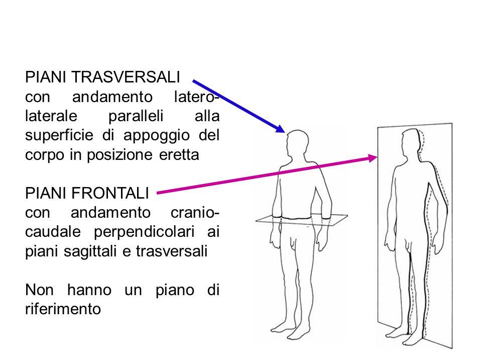 PIANI TRASVERSALI con andamento latero- laterale paralleli alla superficie di appoggio del corpo in posizione eretta PIANI FRONTALI con andamento cran