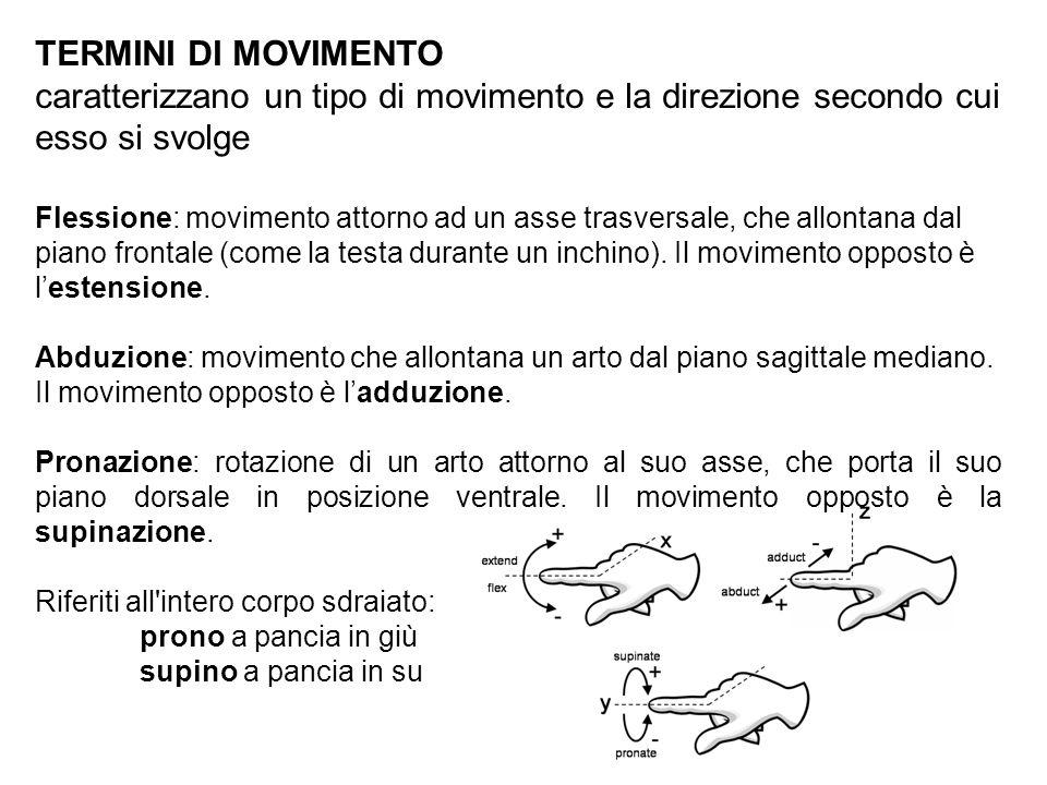 TERMINI DI MOVIMENTO caratterizzano un tipo di movimento e la direzione secondo cui esso si svolge Flessione: movimento attorno ad un asse trasversale