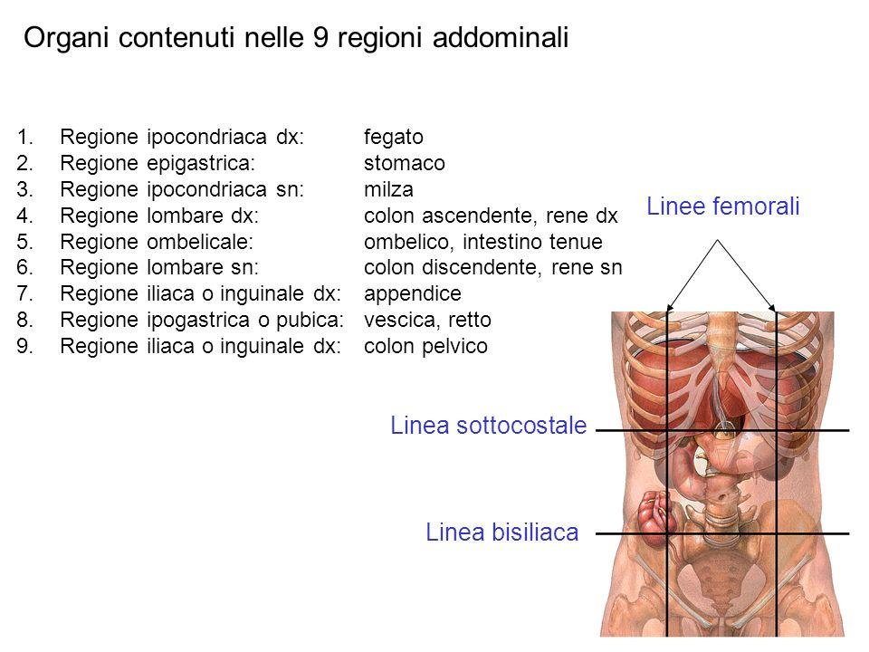 Organi contenuti nelle 9 regioni addominali 1.Regione ipocondriaca dx: fegato 2.Regione epigastrica:stomaco 3.Regione ipocondriaca sn: milza 4.Regione