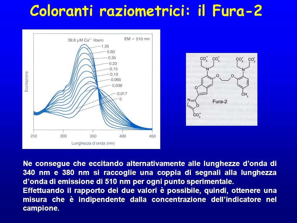 Coloranti a singola : il Fluo-3 Spettri di emissione del Fluo-3 ottenuti eccitando alla lunghezza donda di 488 nm e in presenza di diverse concentrazioni di Ca 2+ libero