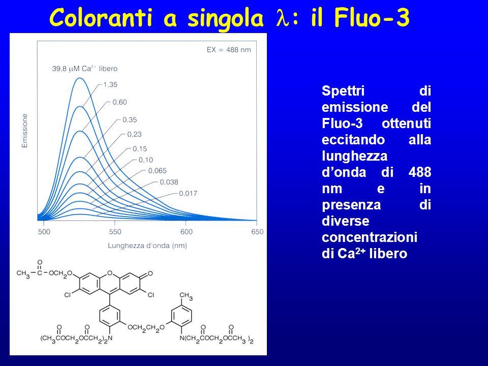Coloranti a singola : il Fluo-3 Spettri di emissione del Fluo-3 ottenuti eccitando alla lunghezza donda di 488 nm e in presenza di diverse concentrazi
