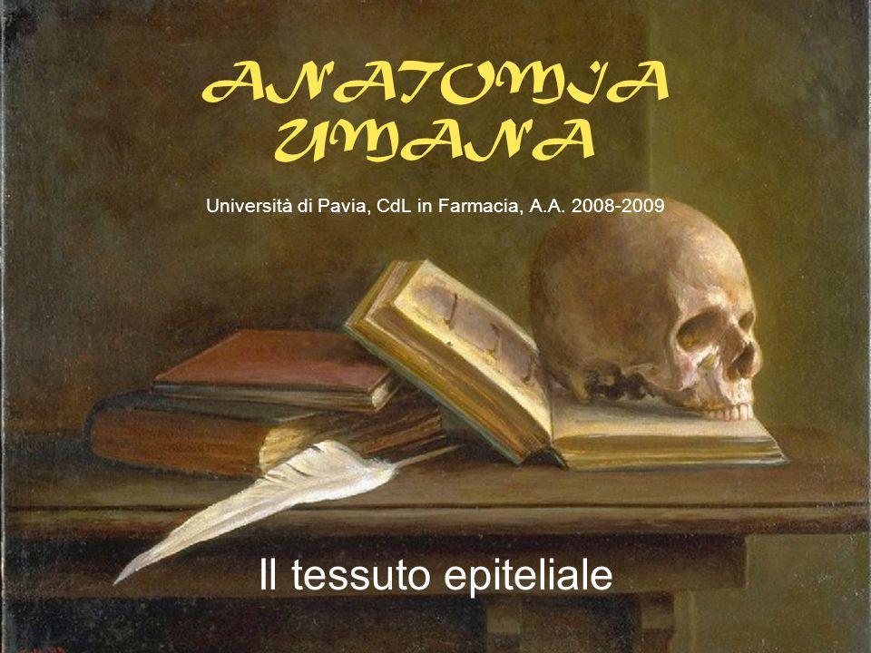 ANATOMIA UMANA Università di Pavia, CdL in Farmacia, A.A. 2008-2009 Il tessuto epiteliale