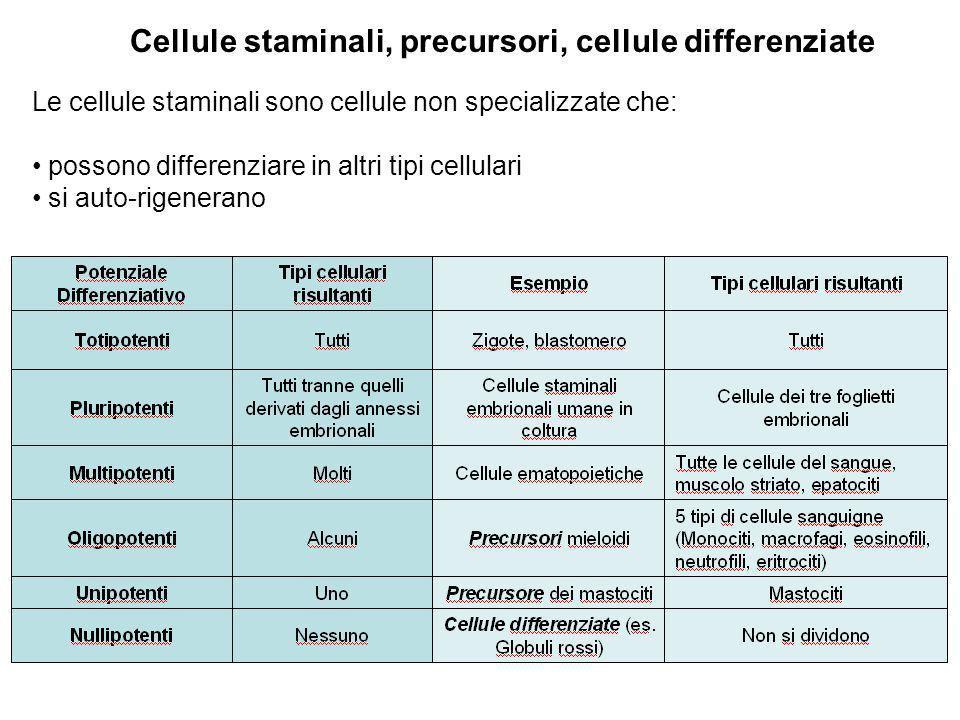 Cellule staminali, precursori, cellule differenziate Le cellule staminali sono cellule non specializzate che: possono differenziare in altri tipi cell