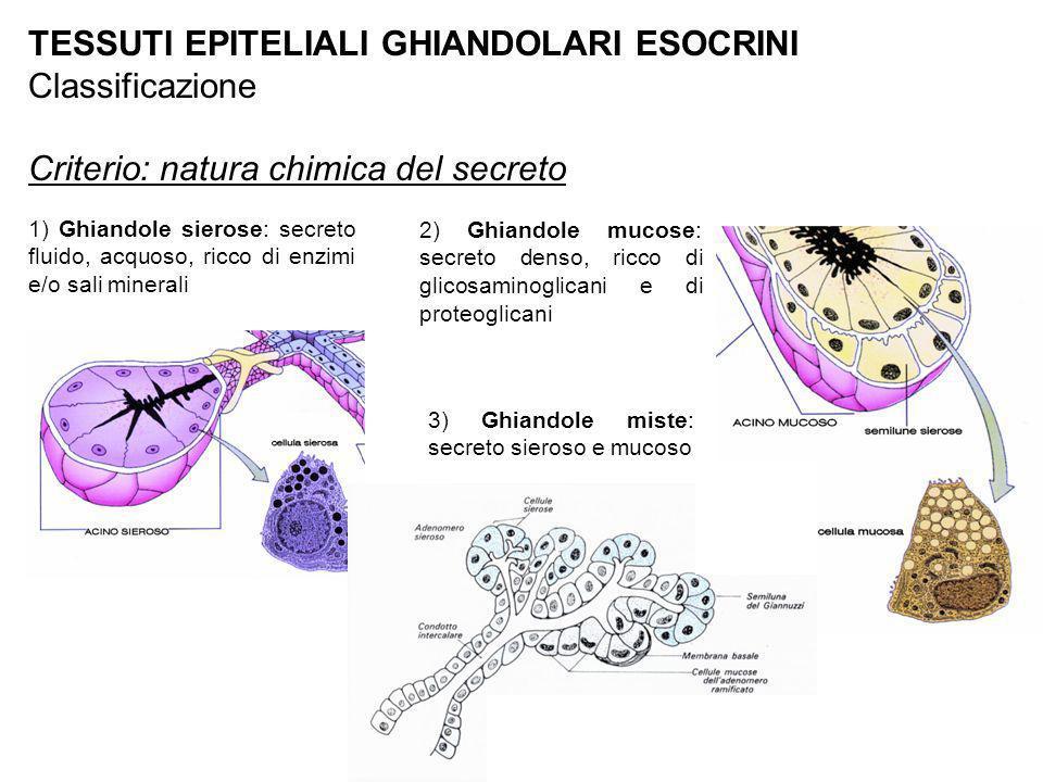 TESSUTI EPITELIALI GHIANDOLARI ESOCRINI Classificazione Criterio: natura chimica del secreto 1) Ghiandole sierose: secreto fluido, acquoso, ricco di e
