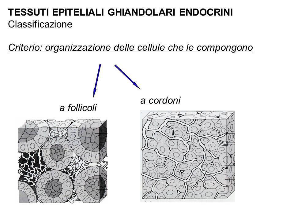 TESSUTI EPITELIALI GHIANDOLARI ENDOCRINI Classificazione Criterio: organizzazione delle cellule che le compongono a follicoli a cordoni