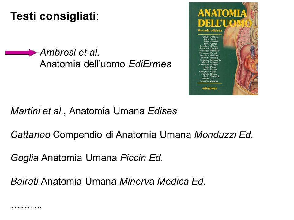 Testi consigliati: Ambrosi et al. Anatomia delluomo EdiErmes Martini et al., Anatomia Umana Edises Cattaneo Compendio di Anatomia Umana Monduzzi Ed. G