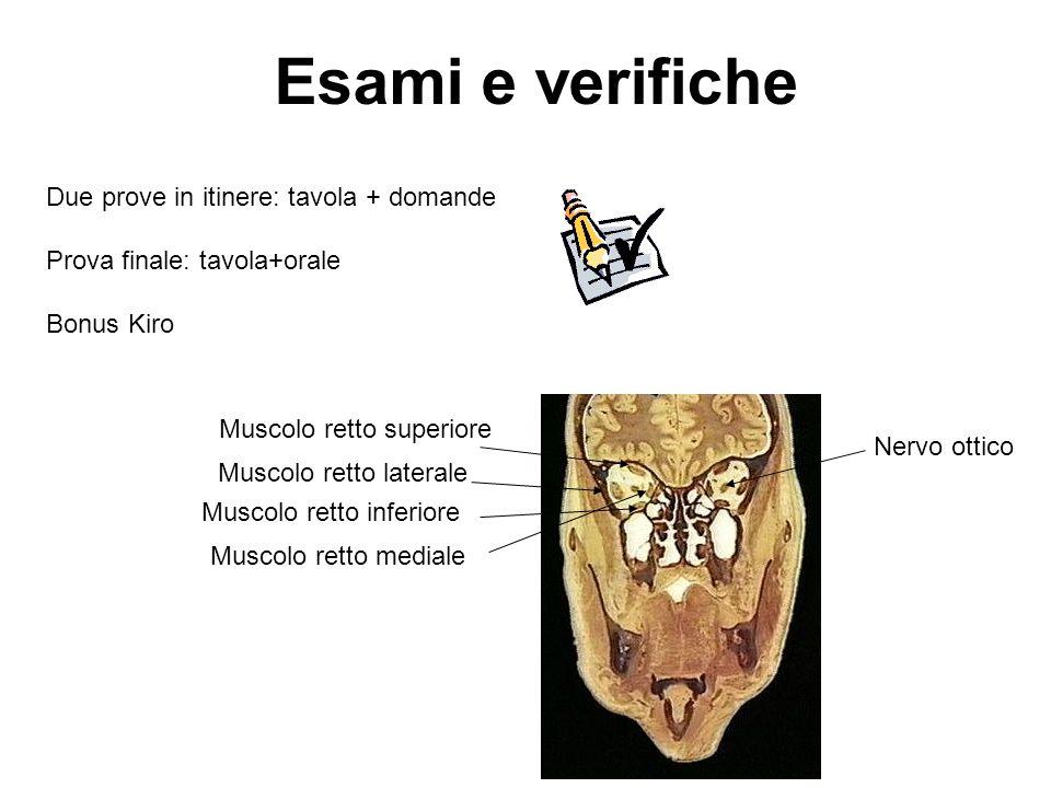 Esami e verifiche Due prove in itinere: tavola + domande Prova finale: tavola+orale Bonus Kiro Muscolo retto superiore Muscolo retto inferiore Muscolo
