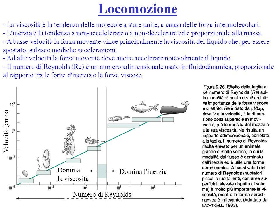 Locomozione - La viscosità è la tendenza delle molecole a stare unite, a causa delle forza intermolecolari. - L'inerzia è la tendenza a non-accelelera
