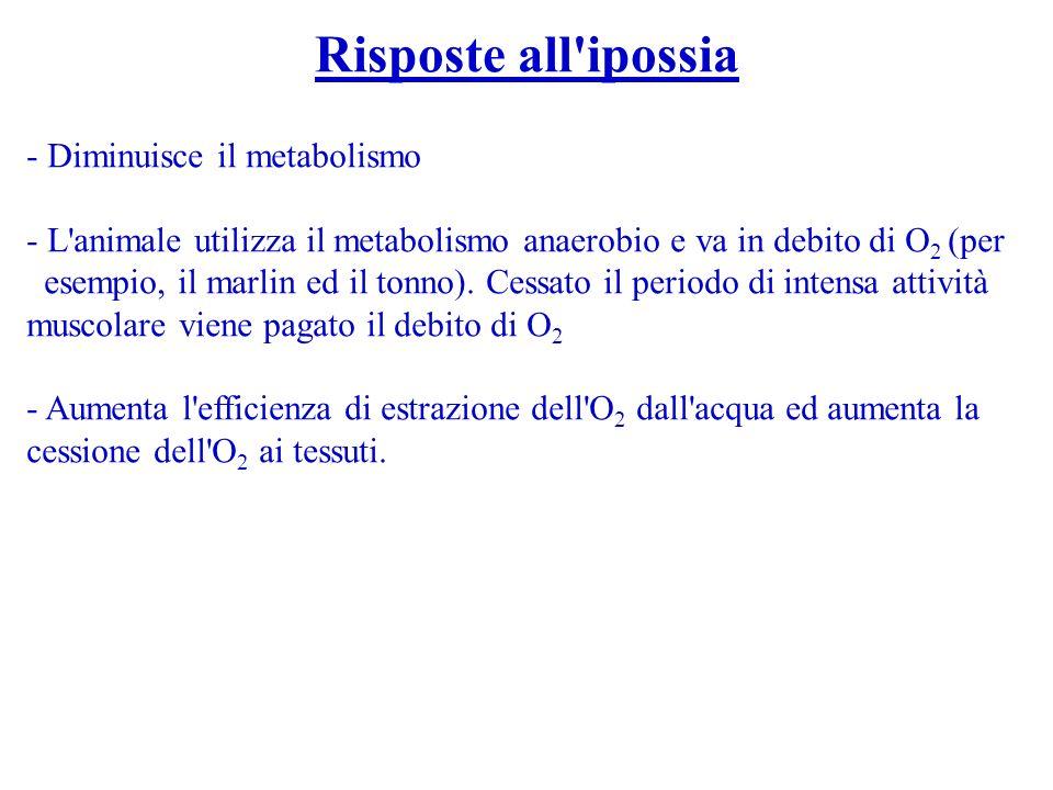 Risposte all'ipossia - Diminuisce il metabolismo - L'animale utilizza il metabolismo anaerobio e va in debito di O 2 (per esempio, il marlin ed il ton