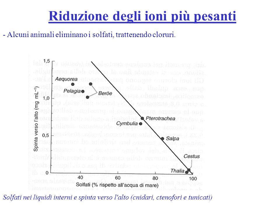 Riduzione degli ioni più pesanti Solfati nei liquidi interni e spinta verso l'alto (cnidari, ctenofori e tunicati) - Alcuni animali eliminano i solfat