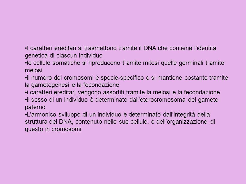 I caratteri ereditari si trasmettono tramite il DNA che contiene lidentità genetica di ciascun individuo le cellule somatiche si riproducono tramite m