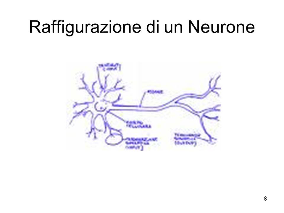 8 Raffigurazione di un Neurone