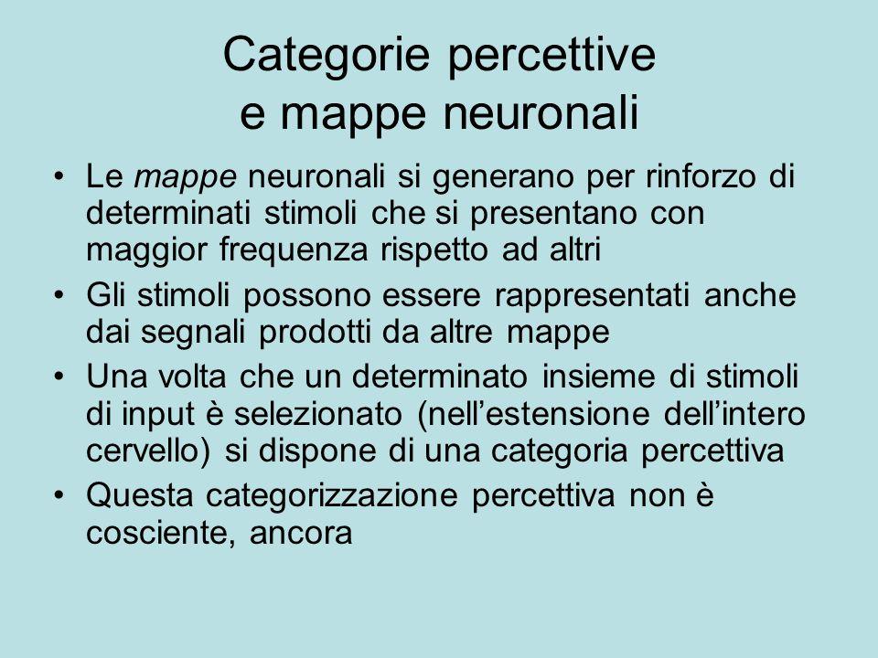 Categorie percettive e mappe neuronali Le mappe neuronali si generano per rinforzo di determinati stimoli che si presentano con maggior frequenza risp