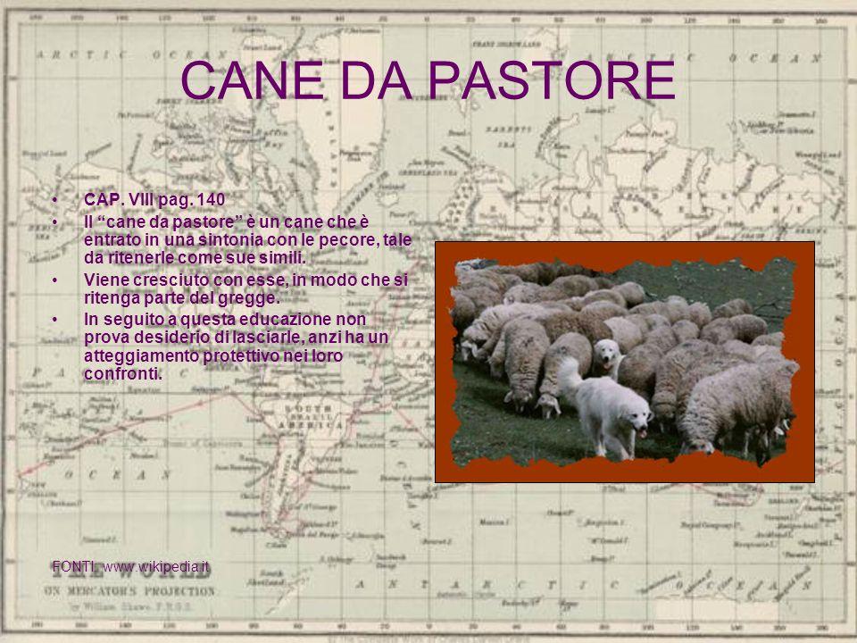 CANE DA PASTORE CAP. VIII pag. 140 Il cane da pastore è un cane che è entrato in una sintonia con le pecore, tale da ritenerle come sue simili. Viene