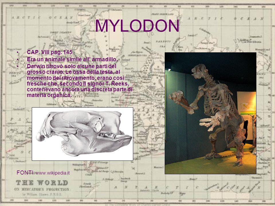 MYLODON CAP. VIII pag. 145 Era un animale simile all armadillo. Darwin ritrovò solo alcune parti del grosso cranio. Le ossa della testa, al momento de