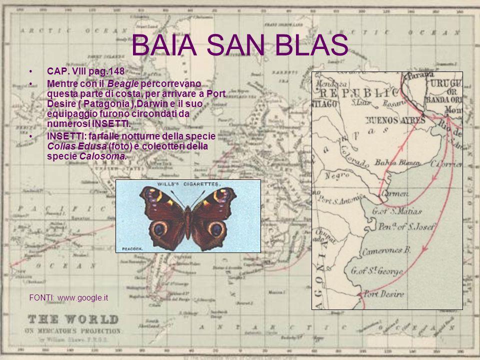 BAIA SAN BLAS CAP. VIII pag.148 Mentre con il Beagle percorrevano questa parte di costa, per arrivare a Port Desire ( Patagonia ),Darwin e il suo equi