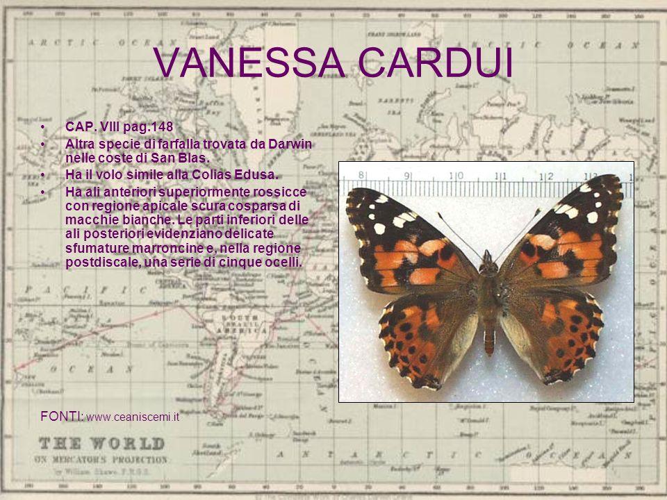 VANESSA CARDUI CAP. VIII pag.148 Altra specie di farfalla trovata da Darwin nelle coste di San Blas. Ha il volo simile alla Colias Edusa. Ha ali anter
